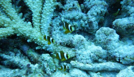 2020年真夏の沖縄旅行その4 慶良間で2回目のダイビング!